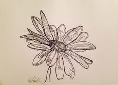 Daisy Flower Line Drawing : Line drawing flowers yellow daisies project progress