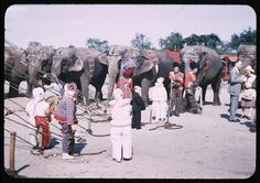 1946 Last day of circus    Description: Clown midgets and Elephants    Creator: Cushman, Charles Weever, 1896-1972