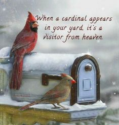 When a cardinal appears in your yard, it's a visitor from heaven. I've had a lot of visitors lately. Signs From Heaven, Miss My Mom, Beautiful Birds, Beautiful Things, In This World, Qoutes, First Love, Bible Verses, Cute Animals