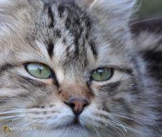 #Cat #Photography #Wallpaper