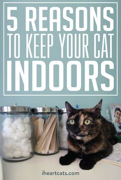 Keep your kitty cozy indoors!