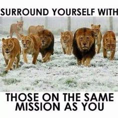 Surround yourself with those one the same mission as you life quotes quotes positive quotes quote inspiring