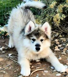Omg, he's so adorably fluffy! I want one!