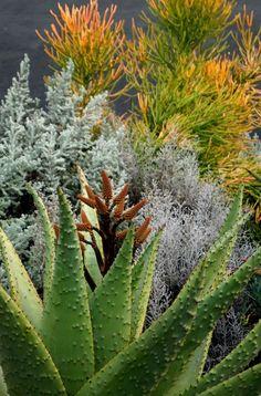 Succulents, firesticks, misc garden.