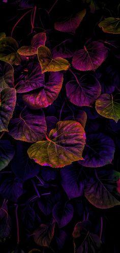 Flower Phone Wallpaper, Cellphone Wallpaper, Mobile Wallpaper, Wallpaper Samsung, Colorful Wallpaper, Nature Wallpaper, Wallpaper Backgrounds, Dark Wallpaper, Patterns Background