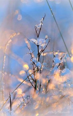 All sizes | Natures season decoration | Flickr - Photo Sharing!