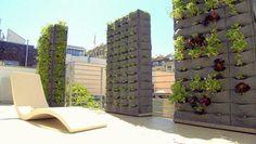 Living Walls & Vertical Gardens
