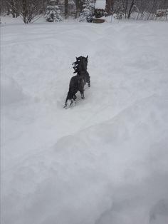 Glorioso in the snow