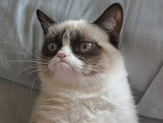 Meet Grumpy Cat memes that will make you LOL. Check Angry Cat Hate, Good and other popular memes. Check also for Grumpy Toad and Grumpy Turtle. Grumpy Cat Quotes, Gato Grumpy, Funny Grumpy Cat Memes, Funny Cats, Funny Jokes, Grumpy Kitty, Fun Funny, Cat Jokes, Funny Insults