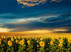 Sunset over the sunflower fields in Bulgaria. One of the most beautiful sunsets on Earth that many Bulgarians see but can not feel the encha. Image Nature, All Nature, Amazing Nature, Beautiful World, Beautiful Places, Beautiful Pictures, Beautiful Sky, Images Wallpaper, Nature Wallpaper