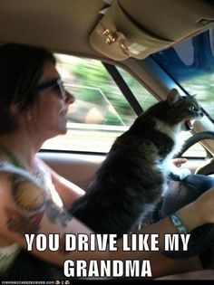 You drive like my Grandma!