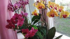 Orchidea Vám vďaka týmto trikom pokvitne ako ešte nikdy! Tu je správny spôsob ako sa o ňu starať! Indoor Plants, Garden Landscaping, Glass Vase, Gardening, Landscape, Fruit, Terrarium, Therapy, Plant