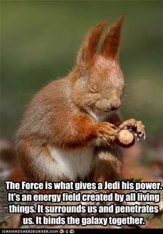 Squirrel & The Force?  Explains a lot if squirrels are Jedi Knights.  No wonder they can defeat all the squirrel proofing.