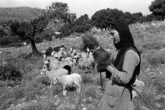 Lessing,Erich.Young woman in the fields of Mallia spinning while guarding her flock of sheep. Crete,1955