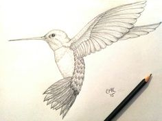 Hummingbird sketch original
