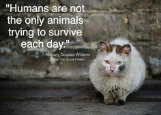 """""""Humanos não são os únicos animais tentando sobreviver a cada dia.""""  Anthony Douglas Williams #viralata #adote #srd"""