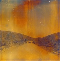 the Old West Blood Meridian, Sx 70 Film, Photo Class, Desert Dream, Earth Color, Muse Art, Grain Of Sand, Greatest Adventure, Old West