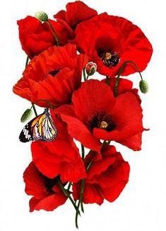 Corn Poppy Seeds / Red Poppy (Papaver rhoeas) – World of Flowers Red Poppy Tattoo, Poppy Tattoo Small, Poppy Drawing, Poppy Seed Chicken, Poppy Seed Dressing, Poppies Tattoo, Image 3d, Red Poppies, Poppy Flowers