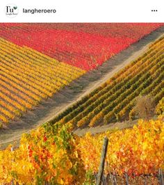 Powered by RebelMouse Palette, Vineyard, Outdoor, Instagram, Italia, Outdoors, Vine Yard, Pallets, Vineyard Vines
