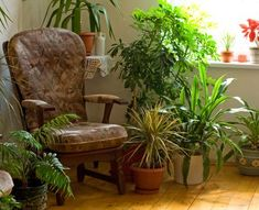 Pop quiz: which is more polluted, indoor air or outdoor air? 10 times out of indoor air in your house, office or apartment is going to be worse than the air outside. Indoor air pollution has been Balcony Plants, Indoor Plants, Potted Plants, Leafy Plants, Indoor Trees, Small Plants, Live Plants, Green Plants, Easy Garden