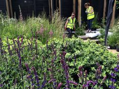 Chelsea Flower Show 2014, designed by Andrew Wilson and Gavin McWilliam