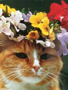 Lana Del Cat.