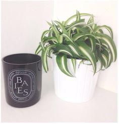 #deco #interior #interiordesign #deskdeco #officedeco #homeoffice #office #desk #plant #green #ikea #diptyque #candle #scentedcandle #doftljus #baies #diptyquebaies #diptyqueparis #scandinavian #simple #minimalistic #simplicity