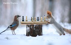 Chess players - null