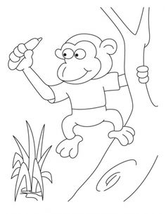 Pigmy monkey coloring pages | Download Free Pigmy monkey coloring pages for kids | Best Coloring Pages