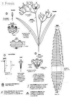 Schema foglie fresia