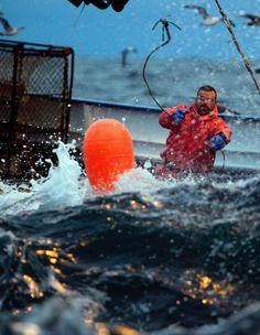 Deadliest_Catch_Northwestern King_Crab