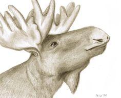 Bruce the Arrogant Moose by *Kimperium on deviantART