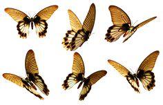 Butterflies 6 PNG Stock by Roys-Art.deviantart.com on @deviantART