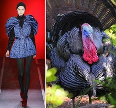 Avian Influences Fashion