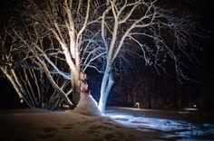 winter wedding  bridal portraits