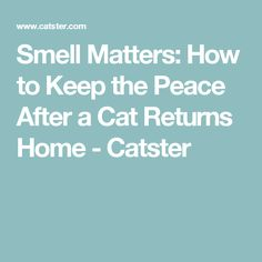 Smell Matters: How to Keep the Peace After a Cat Returns Home - Catster