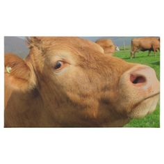 Close Up Portrait Photo of a Brown Cow 45 Piece Box Of Chocolates - photo gifts cyo photos personalize