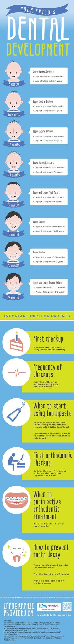 Children's central incisors typically erupt between 8 and 12 months of age. These teeth tend to fall out when children are around 6 or 7 years old. Discover other facts about children's teeth by viewing this infographic from a kids' dentist in Carrollton.