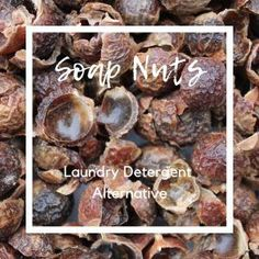 We love Soap Nuts for washing clothes - find out why! Great eco-friendly laundry detergent alternative for eczema and sensitive skin. Healthy Family Meals, Healthy Kids, Healthy Living, Eco Friendly Laundry Detergent, Washing Detergent, Soap Nuts, Recipe Boards, Health Eating, Food Allergies