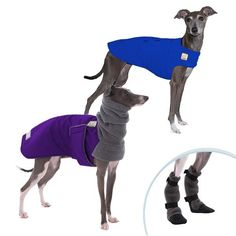 Shop online for Italian Greyhound cold weather dog jackets: Italian Greyhound winter dog coat, Tummy Warmer dog sweater vest, dog boots. USA-made dog clothes.