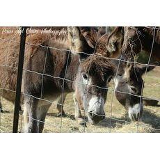 Donkey/Mule   Mules   Pets.Overstock.com