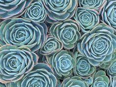 Succulents Photographic Print by Darrell Gulin Botanical Bedroom, Botanical Art, Succulent Wall Art, Daffodils, Framed Art, Wall Art Prints, Bloom, Artwork, Master Bedroom