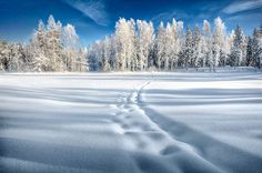 Let's go snow shoe: )winter - Google Search