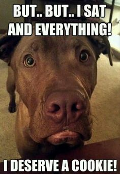 I definitely would give him a doggie cookie!!!