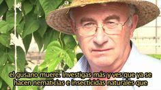 Perilla Frutescens CASTELLANO