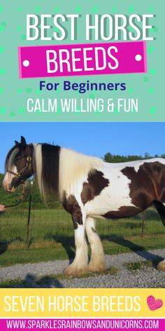 These are breeds that typically have the traits to be great for beginner riders. Although breed alone should not define whether a horse is suited for a beginner rider because there are exceptions to all breeds. I have chosen these breeds based the typical characteristics which are beneficial toward more novice riders. #bestbeginnerhorses #besthorsebreedsforbeginners #beginnerhorsebreeds #beginnerhorserider Horseback Riding Tips, Horse Riding Tips, Cute Baby Bunnies, Cute Babies, Adorable Dogs, Cute Dogs Breeds, Dog Breeds, Western Riding, American Quarter Horse