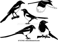 Drawing of magpies collection k7127463 - Search Clipart, Illustration, Fine Art Prints, and EPS Vector Graphics Images - k7127463.jpg