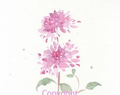 FIne art watercolor painting, bloom, blossom, flower art, abstract PINK PEONY watercolor giclee, giclee print, flower interest 6x8