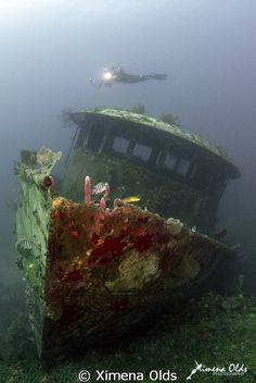 """Mr Bud Wreck"", Honduras http://www.travelbrochures.org/117/central-america-and-the-caribbean/happy-in-honduras"