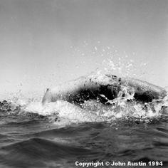 nude woman in sea black white photograph